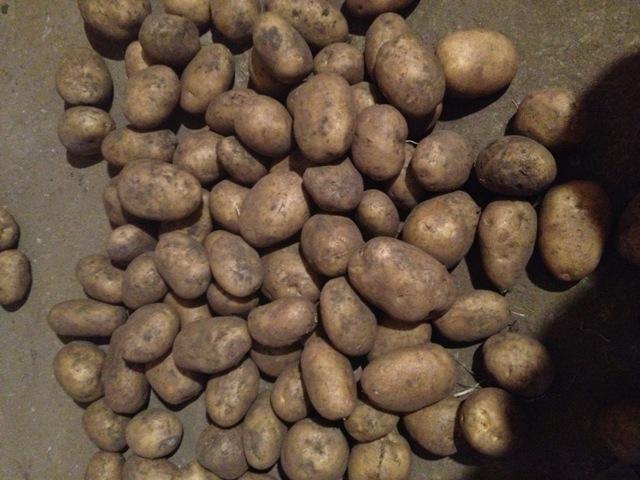 нет фото битвы картофеля невский свадьбе это